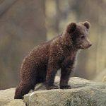 Intalnire cu ursul