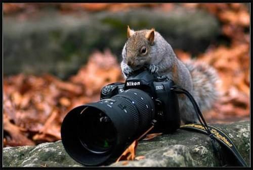 Veveritoiul si Nikon