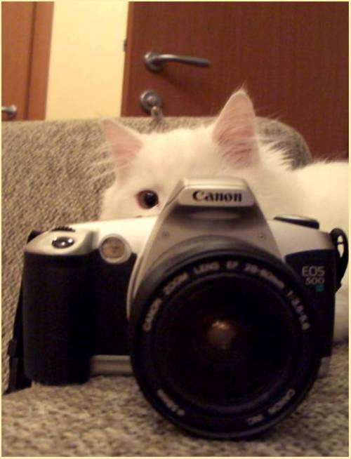 Pisoiul fotograf