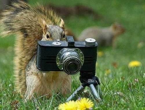 Veveritoiul fotograf cu trepied
