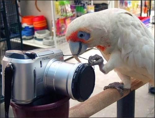 Papagalul si aparatul foto