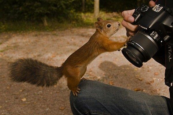 Veveritoi amprentand lentila foto