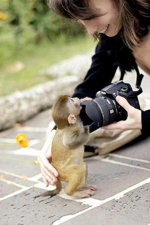 Maimutica si aparatul foto