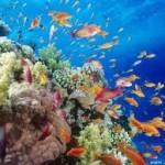 Marele Recif de Corali
