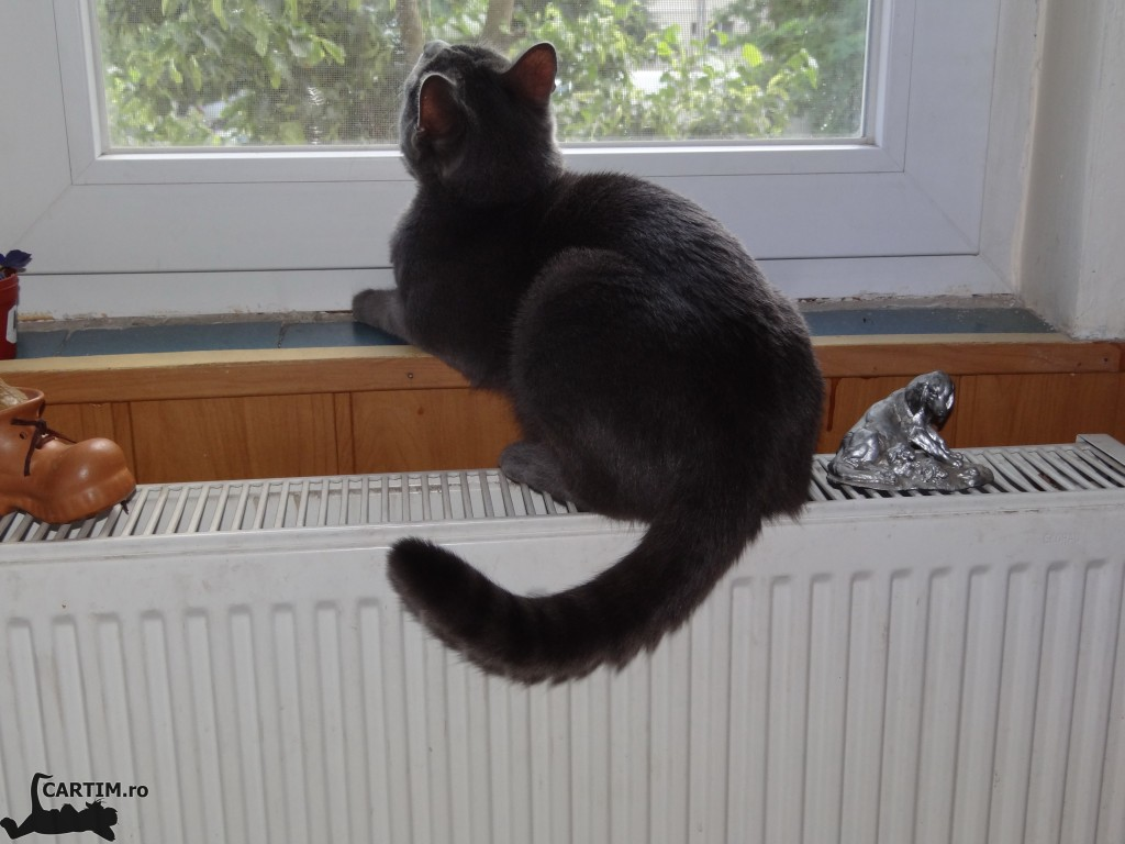 Thomas la geam