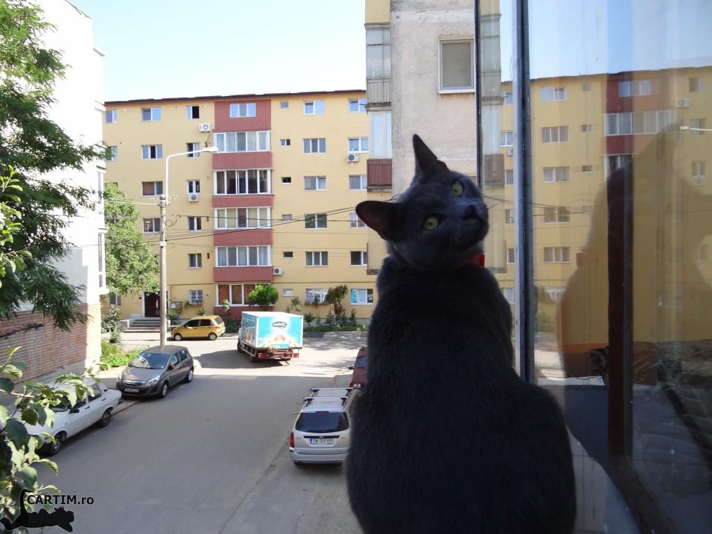 Thomas  privind afara
