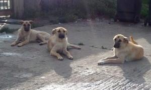 John,Luca, Matk