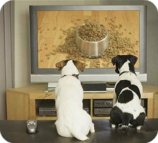 dogs-watching-tv