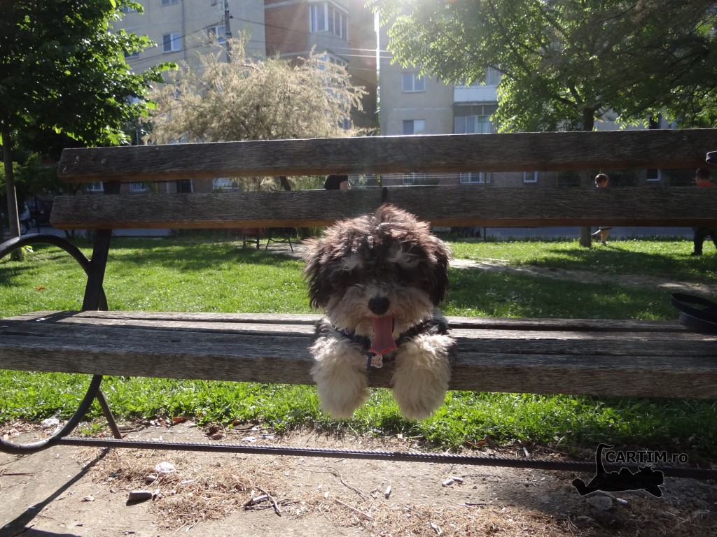 Denis in parc