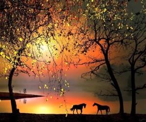 Horses in the Dark