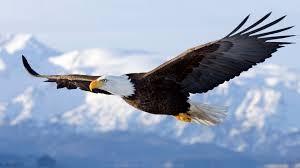Vulturul din Anzi