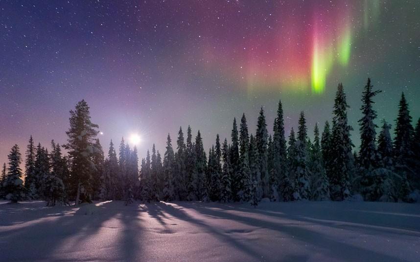 aurora-tree-shadow