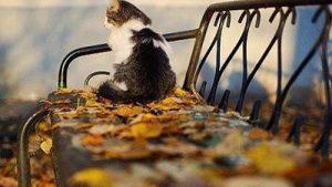 -Pisica in toamna
