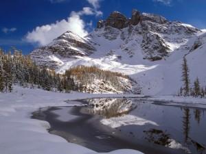 peisaje-iarna-in-natura