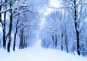 winter-042