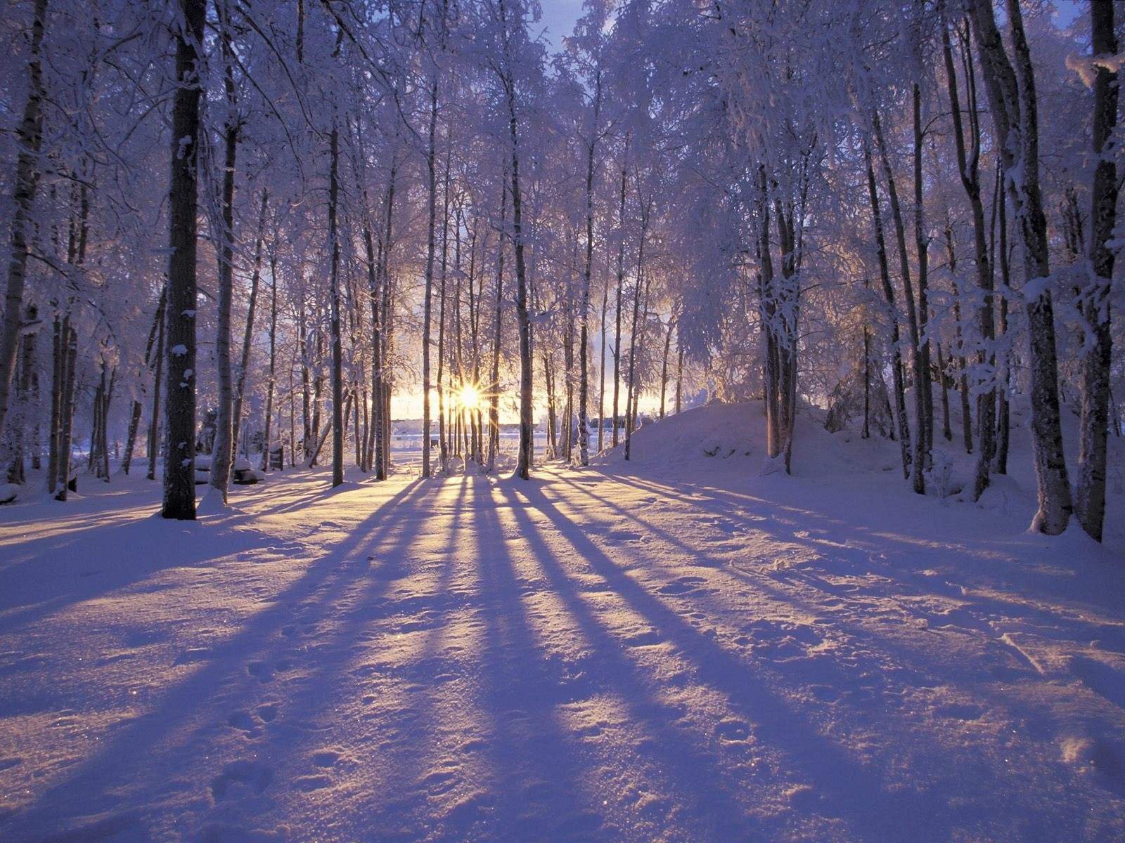 iarna-4