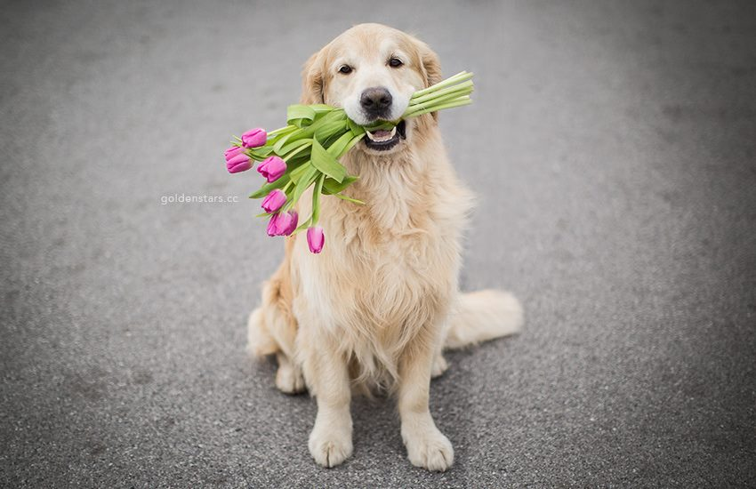 Dog with Flower