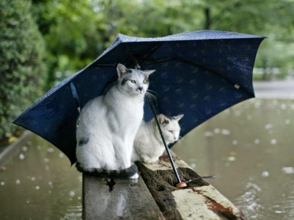 Pisicute in ploaie