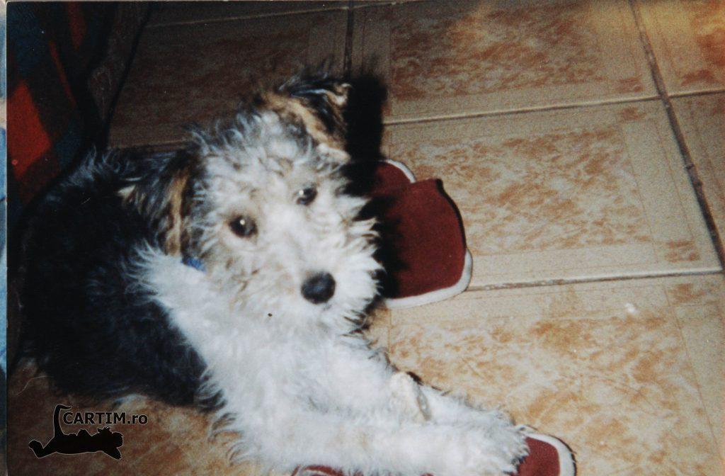 Junior cu slapii 2001