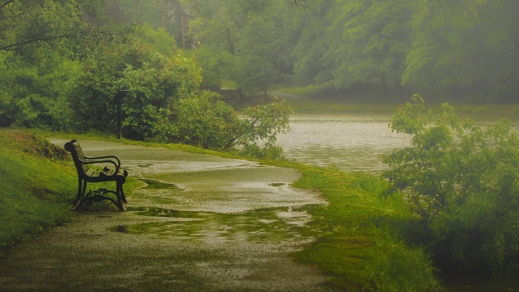 nature-rain-park-bench