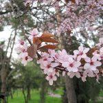 O poveste de Florii