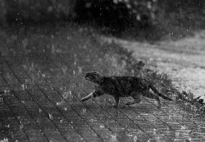 cine-a-inventat-ploaia