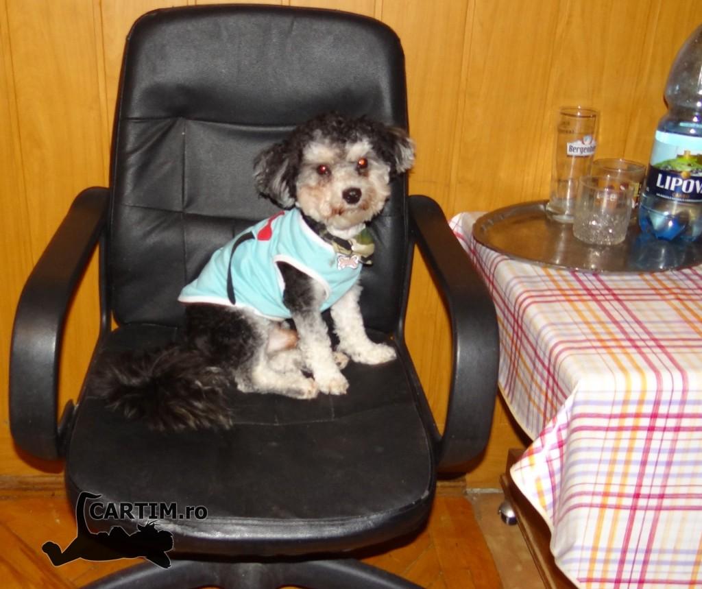 Denis pe scaun