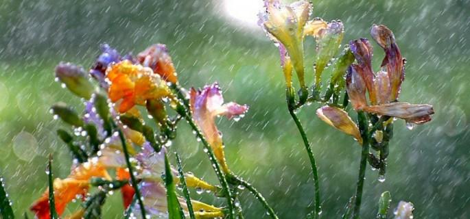 Ploaie primavara
