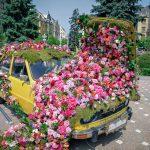 Explozie de flori si culoare la Timisoara