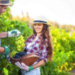 Vrei sa cultivi vita-de-vie? Cum iti organizezi ferma viticola
