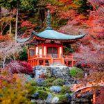 Intelepciune japoneza (II)